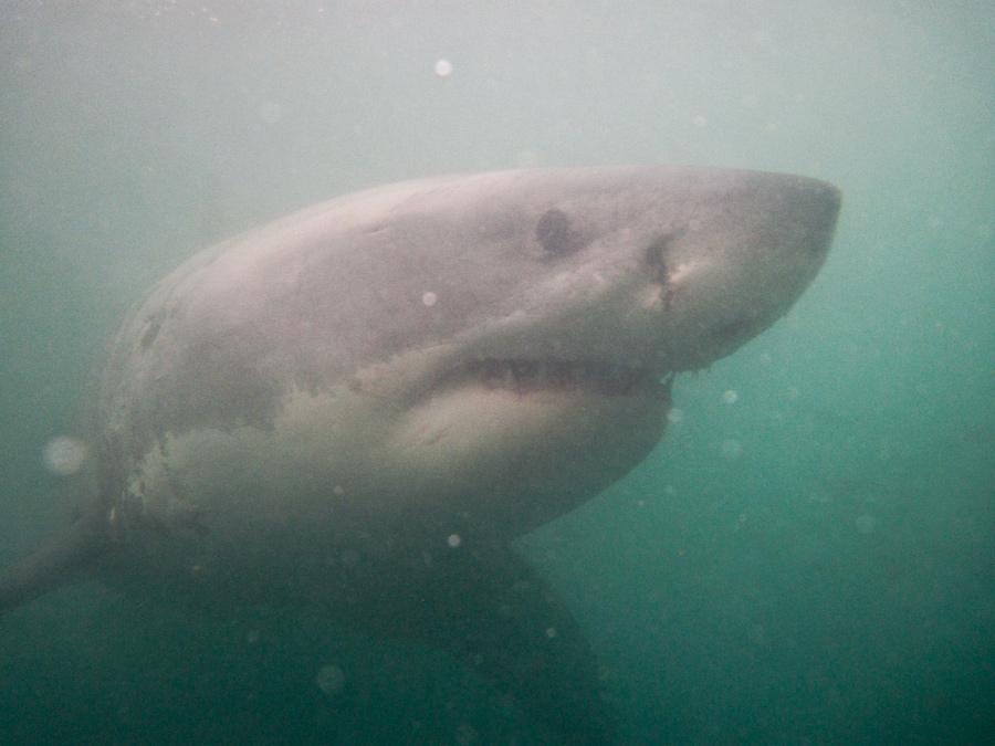 Day19_Shark_3