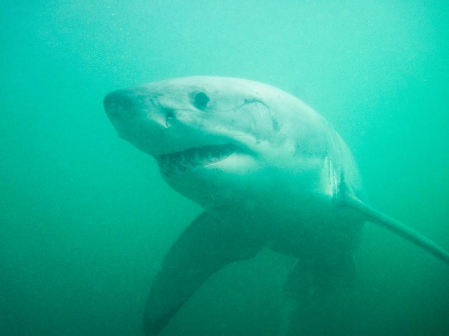 Day19_Shark_5