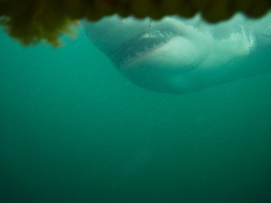 Day19_Shark_6