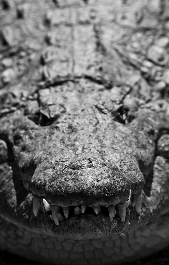 Day9_Croc_2