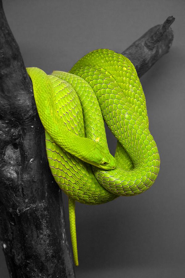 Day9_Snake